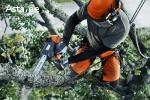 Puude langetamine/Спил деревьев/Arborist